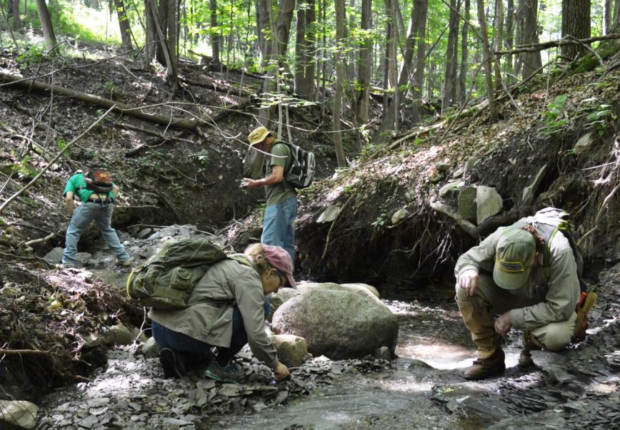Collecting the the Cashaqua Formation exposed on a creek on the east side of South Hill near Middlesex, NY