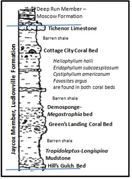 Detailed stratigraphy and marker fossils in the Jaycox member at Green's Landing (from Mayer et. al., 1994)