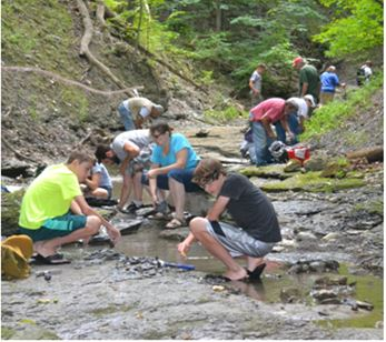 Above: Wayne County club members collecting Middle Devonian fossils in a creek bed last August.   Below: Some of the finds from this and other local trips include A) Pleurodictyum americanum coral, B) Dipleura dekayi trilobite, C) Tropidoleptus carinatus brachiopods, and D. partial Eldredgeops rana trilobite.  Many of the collecting locations in Livingston and surrounding counties are on private land.  Permission should always be sought prior to collecting.