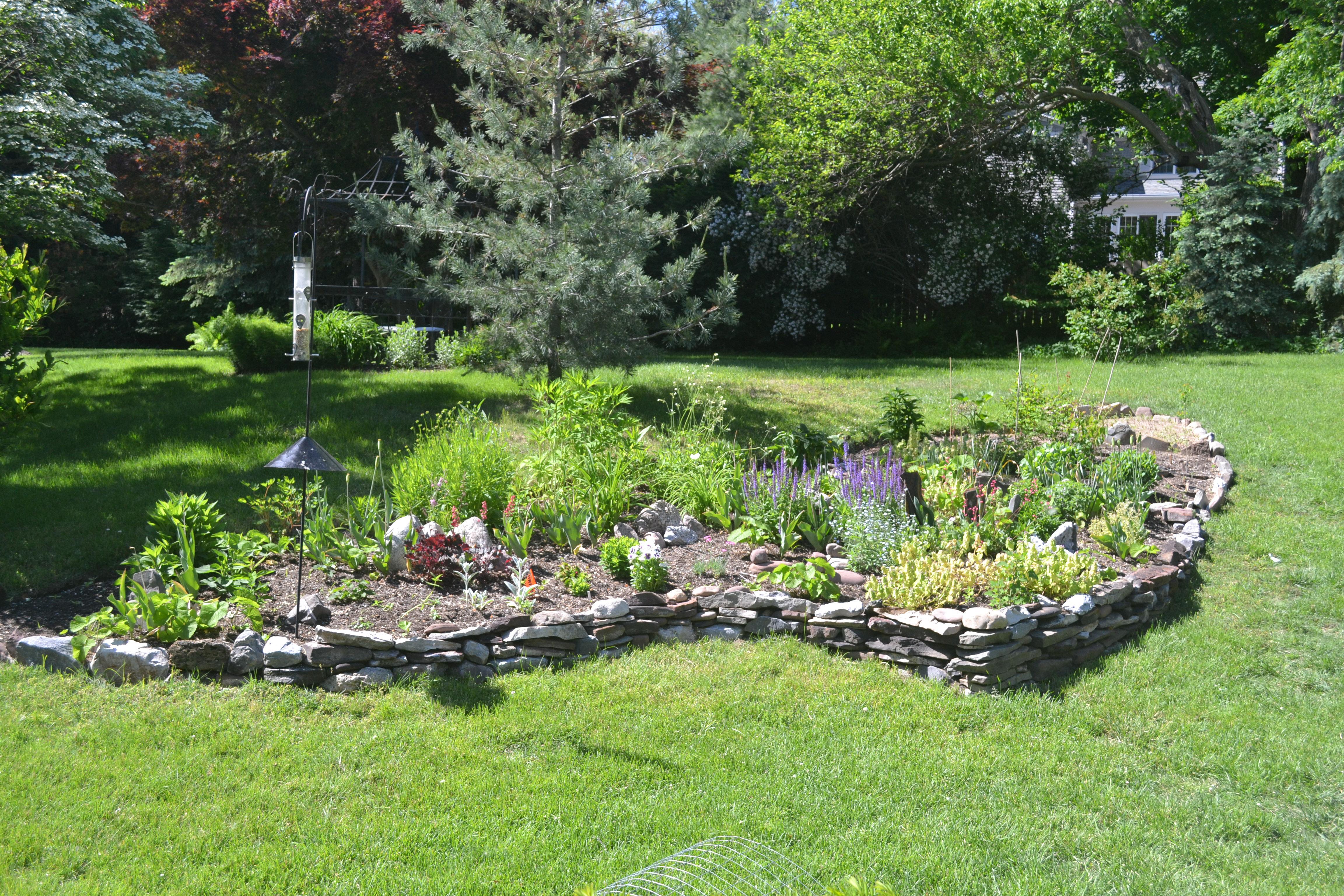 Garden from patio June 4 2013