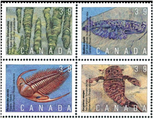fossil stamp 5