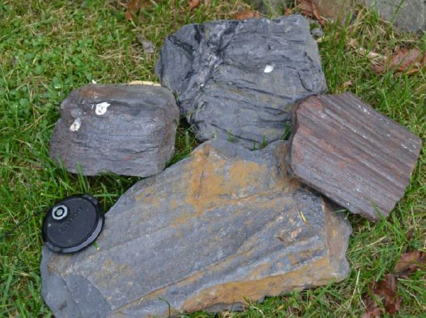 Some more tree parts from Jermyn. Rootlets at the top, bark in the largest piece and a small stump or branch in the upper left, all now part of my Carboniferous forest in Rochester. There was something interesting being sawed in the big saw at the April workshop. Was it that large banded agate piece? You will have to come to our workshops to find out.