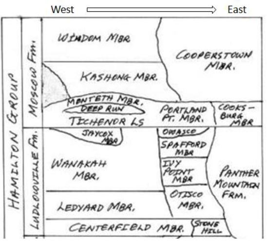 """Stratigraphic column of the Ludlowville and Moscow Formations of the Hamilton Group (modified from """"bingweb.binghamton.edu/ ~kwilson/home.htm"""")"""