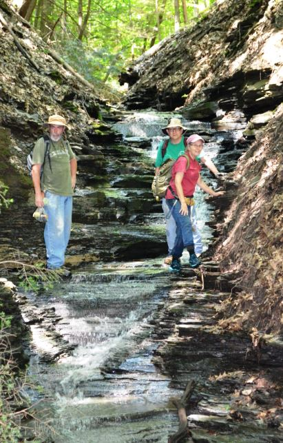 In places the Cashaqua shale erodes to form very pretty cascading waterfalls.