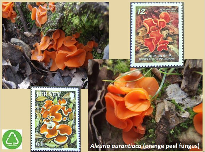 One example of about 30 slides Paul showed combining his local photos with stamps depicting mushrooms.