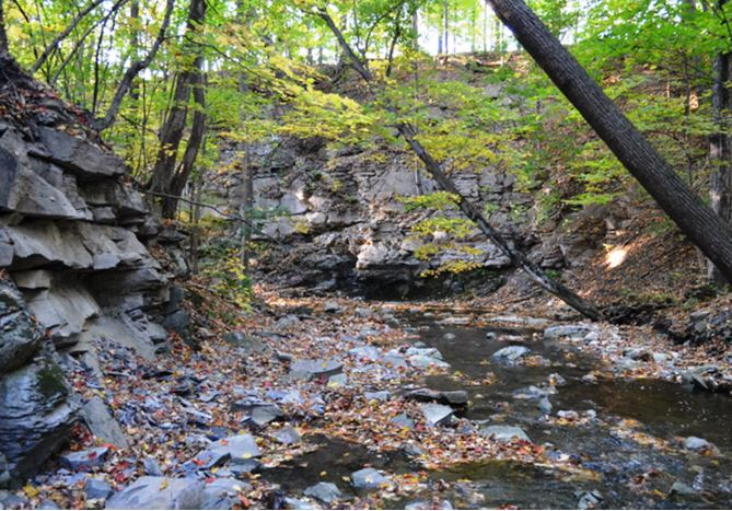The Hamilton Group is well exposed along Reeder Creek as it meanders towards Seneca Lake.